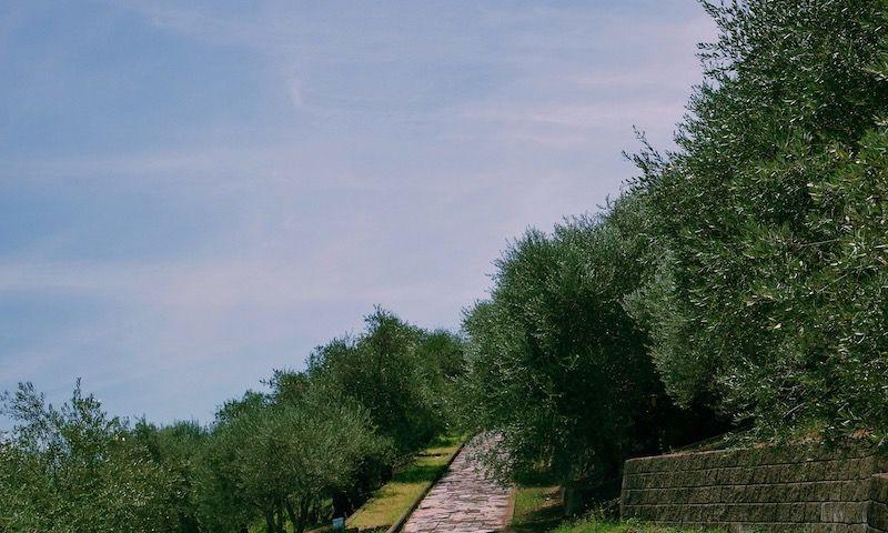 日本最古のオリーブの樹に会える「小豆島オリーブ園」