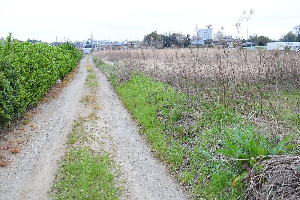 大都市には珍しい未舗装路もある