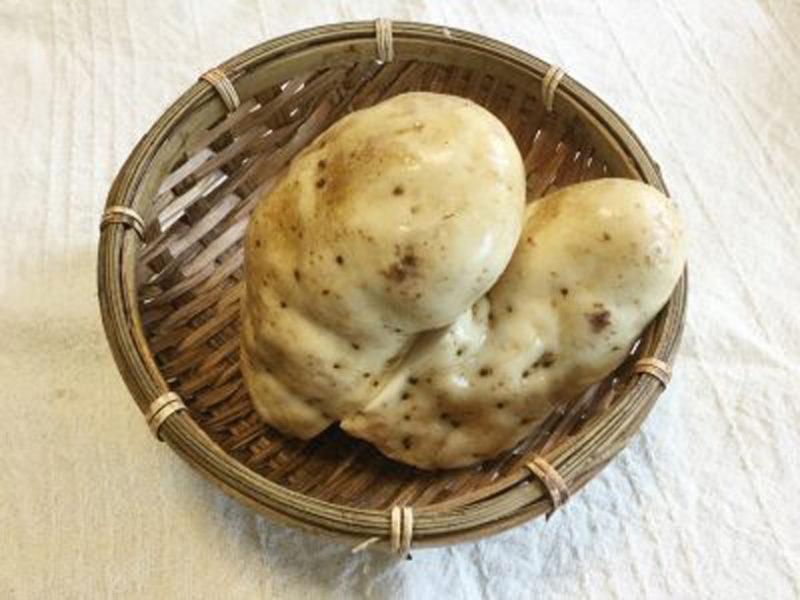 げんこつのようなヤマトイモ