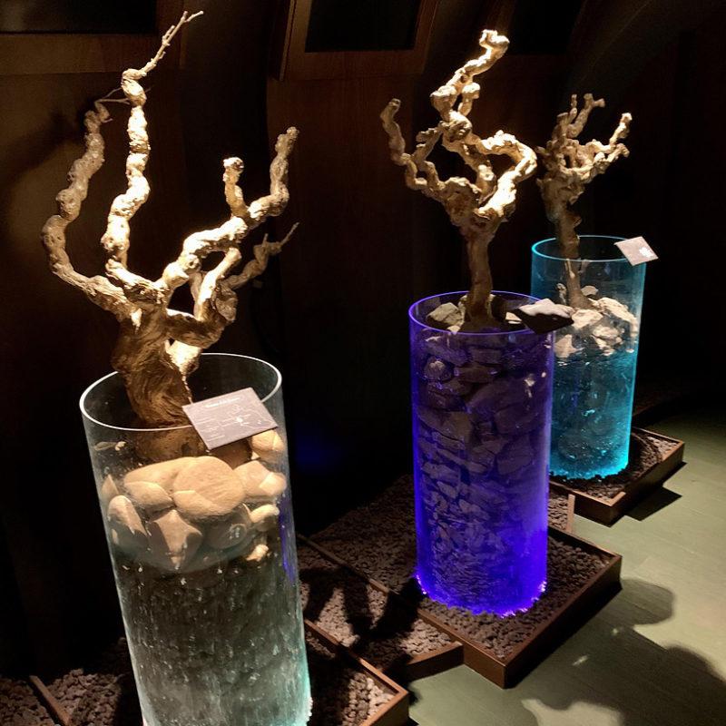 ブドウの木の一部が展示されている