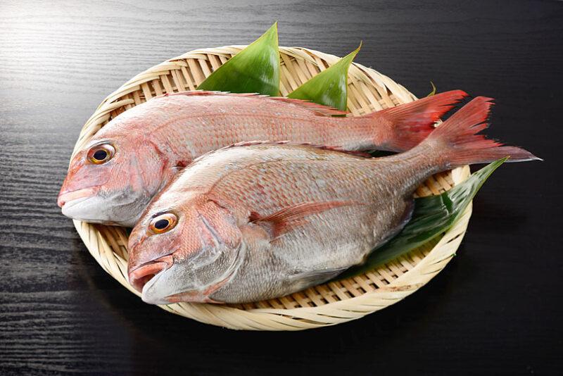 鯛の旬はいつ?/旬の魚と基礎知識