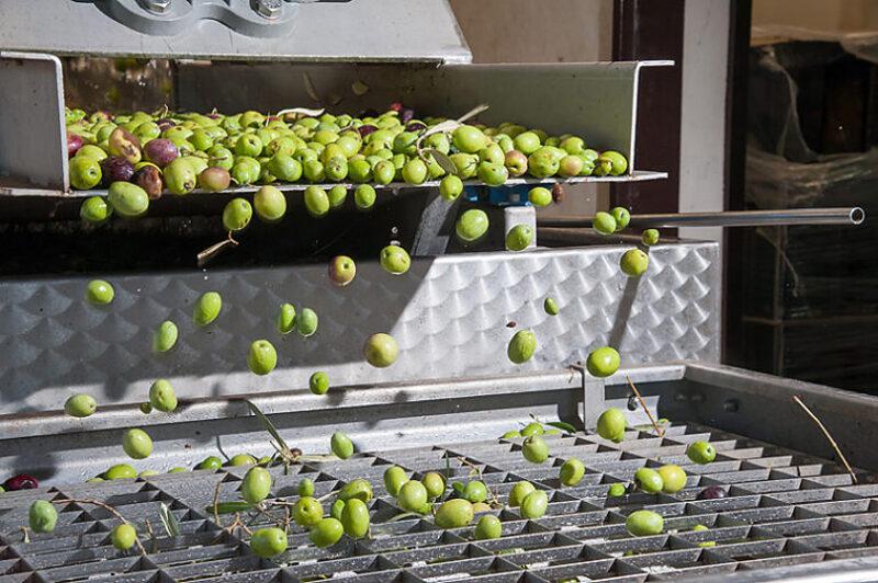 オリーブオイルが安全な理由は製法にも理由がある
