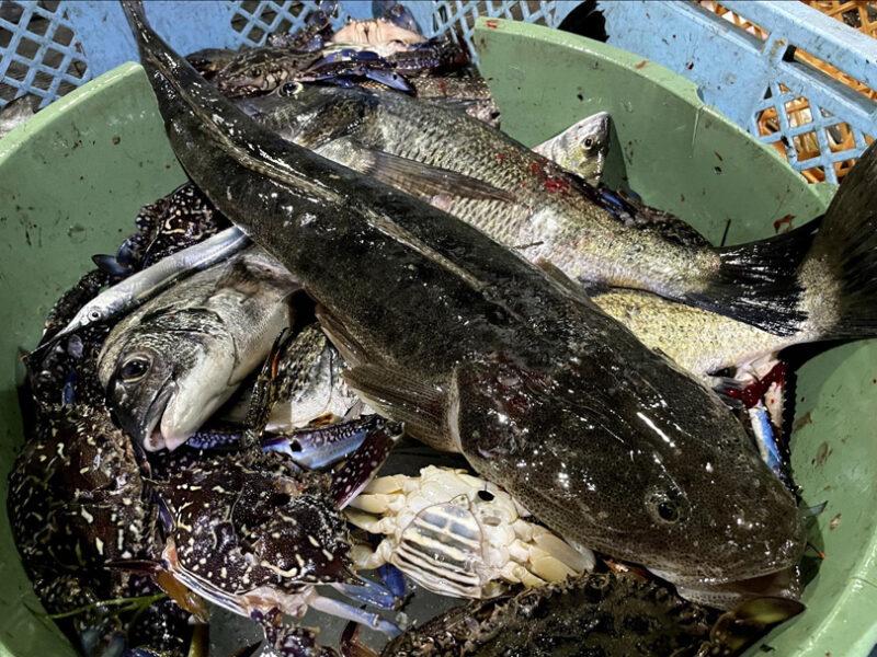 たきや漁の時期と獲れる魚
